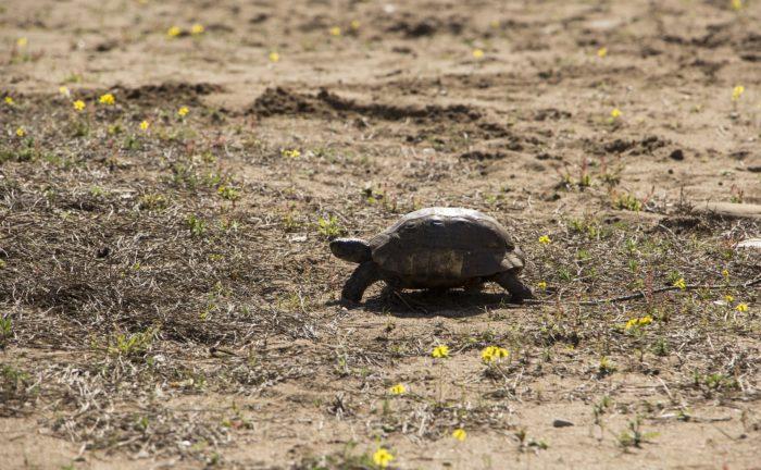 turtle-1309901_1920