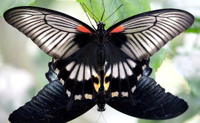 butterflies-1382110