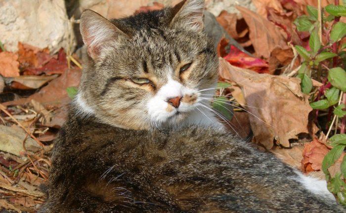 cat-1040709_960_720
